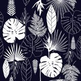 Summer tropical palm tree leaves seamless pattern Stock Photos
