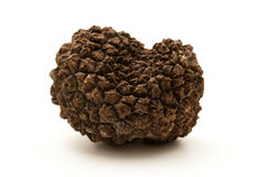 Summer truffle Royalty Free Stock Photo
