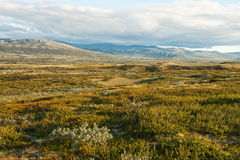 Summer tundra Royalty Free Stock Images