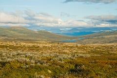Summer tundra Royalty Free Stock Photo