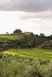 Summer Tuscan green hills with vineyards Royalty Free Stock Image