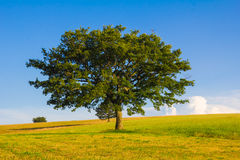 Summer umbria landscape with isolated tree and hay balls Royalty Free Stock Photos
