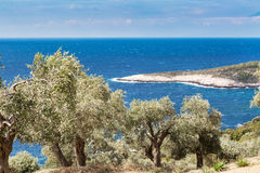 Summer vacation background with greek island Thasos, olive trees and sea, Greece Stock Photography