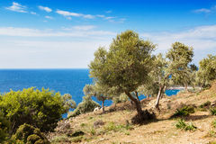 Summer vacation background with greek island Thasos, olive trees and sea, Greece Royalty Free Stock Photos