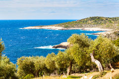 Summer vacation background with greek island Thasos, olive trees and sea, Greece. Summer vacation background with greek island Thasos, olive trees and sea water Royalty Free Stock Photos