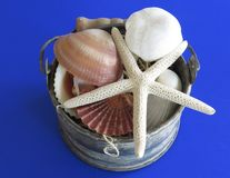 Summer vacation. Close up of starfish and shells like summer vacation background Stock Photos