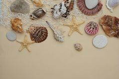 Summer and Vacation concept. Mix of Shells and Stones over Ivory Background with Copy space for Text. Top View. Summer and Vacation concept. mix of Shells and Stock Images