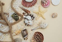 Summer and Vacation concept. mix of Shells and Stones over Ivory Background. Summer and Vacation Concept. mix of Shells and Stones over Ivory Board Royalty Free Stock Photography