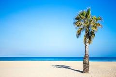 Summer vacation concept - palm tree on sandy beach Stock Photo