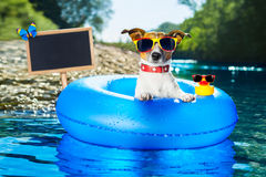 Summer vacation dog blackboard Royalty Free Stock Photography