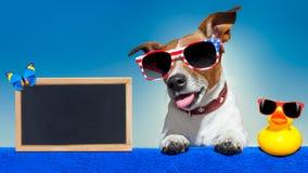 Summer vacation dog blackboard Stock Images
