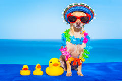 Summer  vacation dog Royalty Free Stock Images