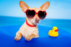 Summer  vacation dog Royalty Free Stock Photography