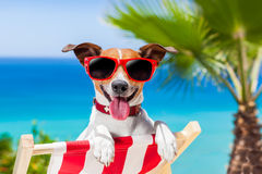 Summer vacation dog Royalty Free Stock Image