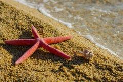 Summer Vacation Holiday Travel  Beach Starfish Royalty Free Stock Image
