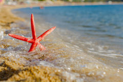 Summer Vacation Holiday Travel  Beach Starfish Stock Image