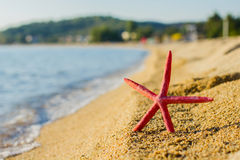 Summer Vacation Holiday Travel  Beach Starfish Stock Images