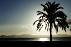 Summer vacation palm tree Royalty Free Stock Image