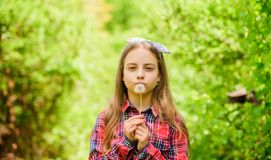 Summer vacation. Rancho and country. happy child hold blowball. little girl and with flower. Natural beauty. Childhood royalty free stock photos