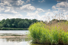 Summer vacation on the river bank. Hunting for wild ducks. White clouds over the forest lake. Stock Image