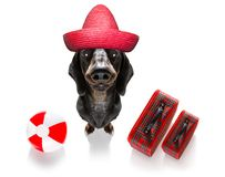 Summer vacation holiday dog. Summer vacation sausage dachshund dog with  luggage and  beach ball isolated on white background stock photography