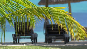 Summer vacation in tropics. Chaise longues and sun umbrella on the coast with clear blue water. Green palm branch in foreground. Shot with changing focus stock footage