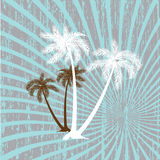 Summer vector background with palms Royalty Free Stock Photos