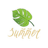 Summer vector hand drawn lettering element and tropical leave monstera. On white. Bright poster made in green and gold colors Stock Photo