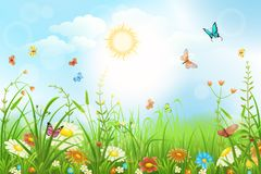 Summer vector meadow Stock Images