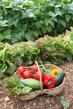 Summer vegetables Royalty Free Stock Image