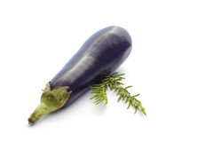 Summer vegetables on white: eggplant and rosemary royalty free stock image