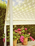 Summer veranda with blooming gardenias Stock Images