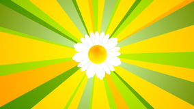 Summer video animation with camomile and beams. Summer motion design with camomile and beams. Video animation HD 1920x1080 royalty free illustration