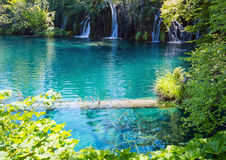 Plitvice Lakes National Park (Croatia). Summer view of beautiful small waterfalls and  trunk of dry tree in clear azure lake (Plitvice Lakes National Park Stock Image