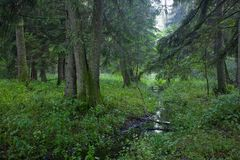 Summer view of deciduous stand with little stream Stock Photo