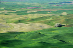 Summer view of farmland pattern Stock Image