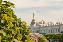 Summer view the Field Mars and Church of the Savior on Spilled Blood stock photography