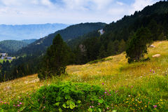 Summer view of forest  mountains landscape Stock Images