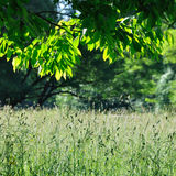 Summer view with grass and branch. View through a branch in summer with grass, sunrays and shadows stock images