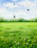 Summer view of the green meadow and flying birds. Royalty Free Stock Photo