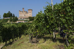 Summer view in the Langhe Unesco heritage Royalty Free Stock Photos