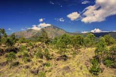 Mountain Abang Kintamani/Bali/. Summer view of Mount Abang Kintamani with trees in the foreground/Bali-Indonesia Stock Images