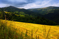 Summer view of mountains with farmland.  Asturia Royalty Free Stock Image