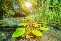 Summer view of a narrow river. stock photo