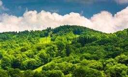 Summer view of ski slopes at Canaan Valley State Park, West Virginia. Summer view of ski slopes at Canaan Valley State Park, West Virginia stock image