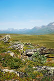 Summer view of Sweden Lapland Royalty Free Stock Photo