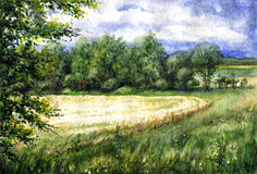 Summer view of the wheat field. Royalty Free Stock Images