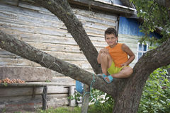 In summer, the village boy sitting on a tree. Royalty Free Stock Photo