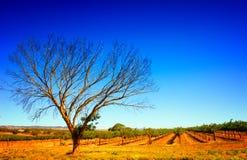 Summer Vineyard stock image