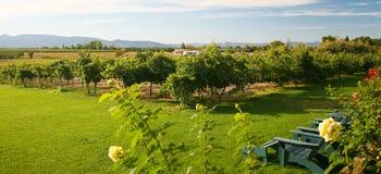 Summer in the Vineyard stock photos